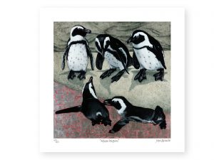 Marc Alexander | African Penguins | Square Archival Print