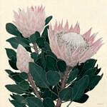 Marc Alexander | King Protea I | Flora