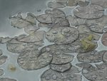 Marc Alexander | Leopard Toads