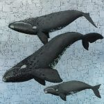 Marc Alexander | Whale Season | Product Image